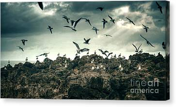 Sea Gulls Canvas Print by Carlos Caetano