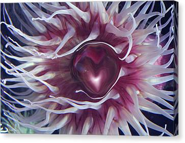 Canvas Print featuring the digital art Sea Heart by Linda Sannuti