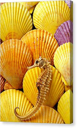 Sea Horse And Sea Shells Canvas Print by Garry Gay