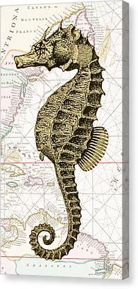 Sea Horse Nautical Chart Canvas Print by Erin Cadigan