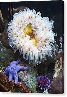 Sea Anenome Canvas Print - Sea Life by Marilyn Hunt