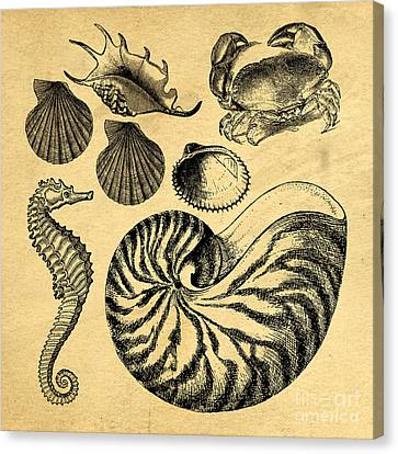 Sea Life Vintage Illustrations Canvas Print by Edward Fielding