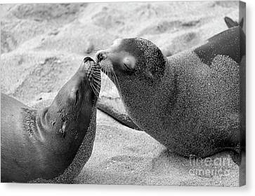 Canvas Print featuring the photograph Sea Lion Tenderness by John F Tsumas
