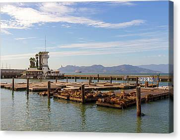 Canvas Print - Sea Lions At Pier 39 In San Francisco by David Gn