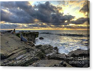 Canvas Print featuring the photograph Sea Lions At Sunset by Eddie Yerkish