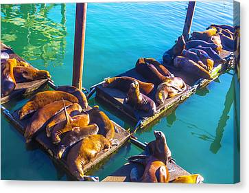 Sea Lions On Harbor Docks Canvas Print by Garry Gay