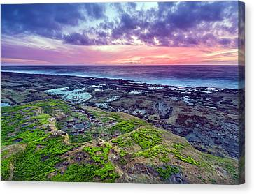 Sea Moss Sunset Canvas Print