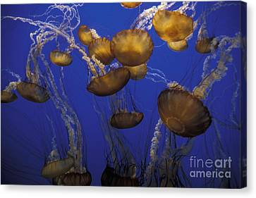Sea Nettels Canvas Print by Stan and Anne Foster
