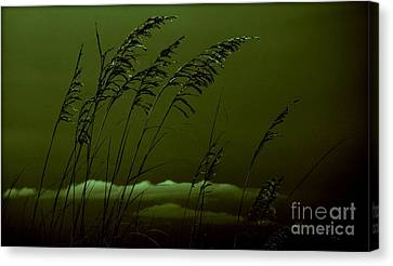 Sea Oat And Clouds Canvas Print by Janice Spivey