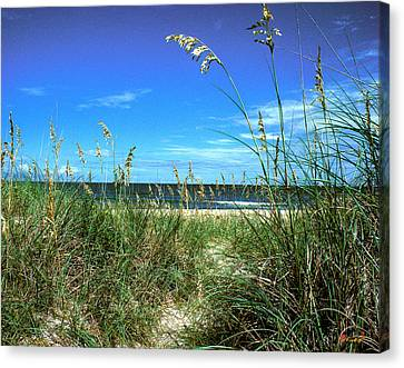 Canvas Print featuring the photograph Sea Oat Dunes 11d by Gerry Gantt