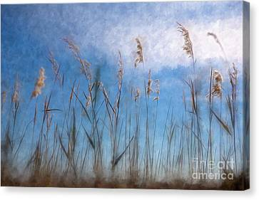 Sea Oats And Sky On Outer Banks Ap Canvas Print by Dan Carmichael