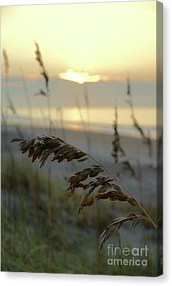 Canvas Print - Sea Oats At Sunrise by Megan Cohen