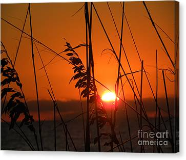 Canvas Print featuring the photograph Sea Oats At Sunset by Terri Mills