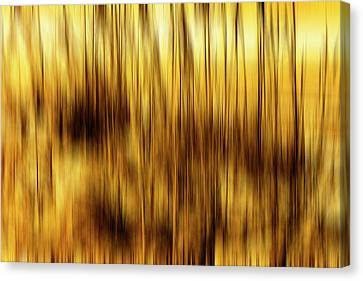 Sea Oats In Motion Canvas Print by Skip Nall