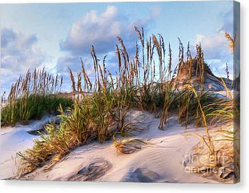 Sea Oats On Outer Banks Sand Dunes Ap Canvas Print