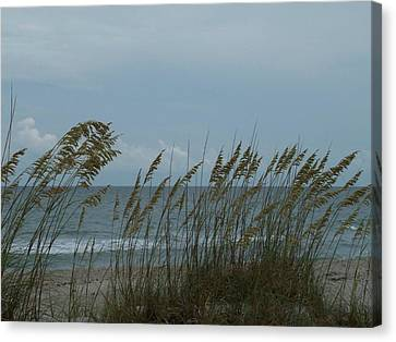 Sea Oats On Wrightsville Beach Canvas Print