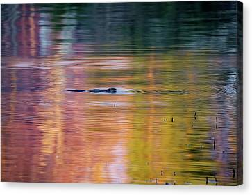 Canvas Print featuring the photograph Sea Of Color by Bill Wakeley