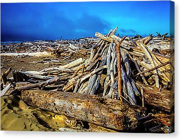 Sea Of Driftwood Canvas Print by Garry Gay