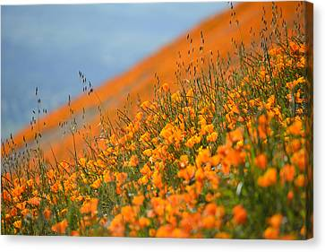 Sea Of Poppies Canvas Print by Kyle Hanson