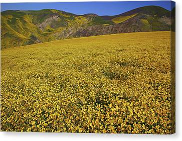 Canvas Print featuring the photograph Sea Of Yellow Up In The Temblor Range At Carrizo Plain National Monument by Jetson Nguyen
