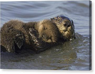 Sea Otter Mother With Pup Monterey Bay Canvas Print by Suzi Eszterhas