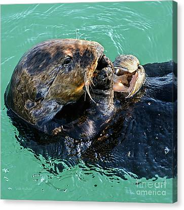 Canvas Print featuring the photograph Sea Otter Munching On A Clam by Susan Wiedmann