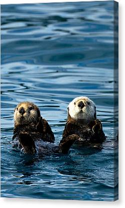 Sea Otter Pair Canvas Print by Adam Pender