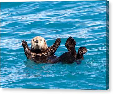 Canvas Print featuring the photograph Sea Otter by Phil Stone