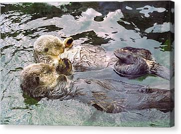 Otter Canvas Print - Sea Otters Holding Hands by BuffaloWorks Photography