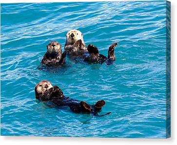 Canvas Print featuring the photograph Sea Otters by Phil Stone