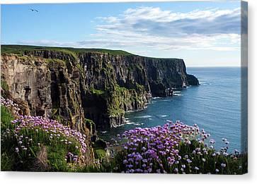 Sea Pink On The Cliffs Canvas Print by Aidan Moran