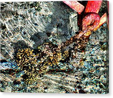 Sea. Rusty Iron And Corals. Canvas Print by Andy Za