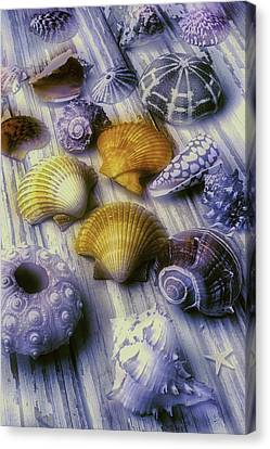 Sea Shell Arrangement  Canvas Print