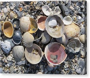 Sea Shell Mozaic Canvas Print