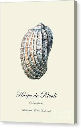 Sea Shell Canvas Print by Patruschka Hetterschij