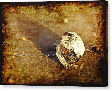 Sea Shell Canvas Print by Svetlana Sewell