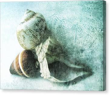 Sea Shells IIi Teal Blue Canvas Print by Ann Powell