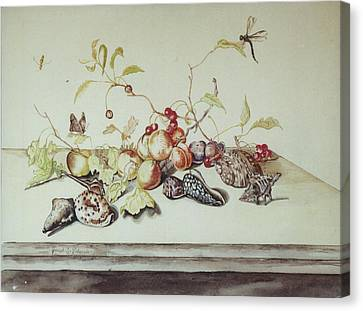 Sea Shells Canvas Print by Joseph Valencia