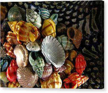 Canvas Print featuring the photograph Sea Shells by Lori Miller
