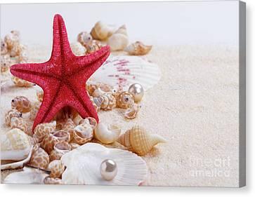 Sea Shells On Sand Canvas Print