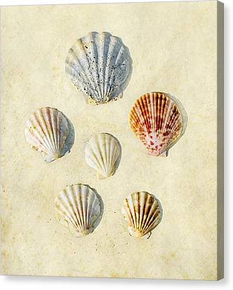 Sea Shells Canvas Print by Paul Grand