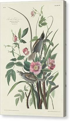 Sea-side Finch Canvas Print