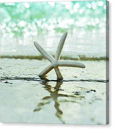 Seashell Canvas Print - Sea Star by Laura Fasulo