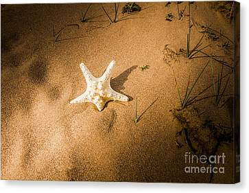 Sea Star Scene Canvas Print by Jorgo Photography - Wall Art Gallery