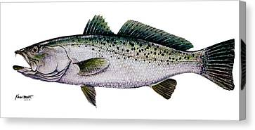 Sea Trout Canvas Print by Kevin Brant