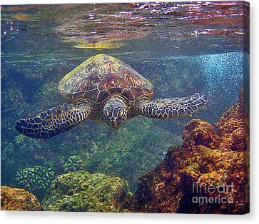 Sea Turtle - Close Up Canvas Print