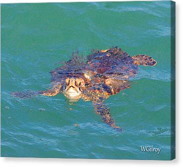 Sea Turtle / Cocoa Beach Canvas Print by W Gilroy