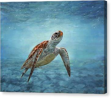 Sea Turtle Canvas Print by David Stribbling