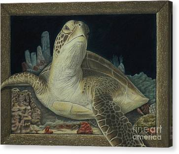 Sea Turtle Canvas Print by Jennifer Watson