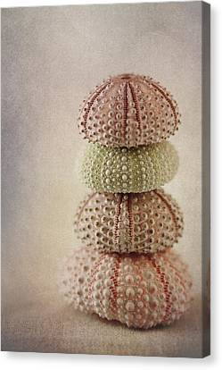 Sea Urchins Canvas Print by Carol Leigh